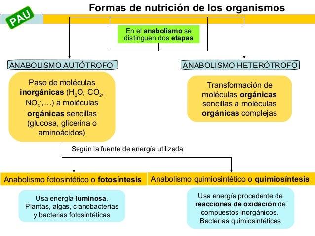 El anabolismo 2013