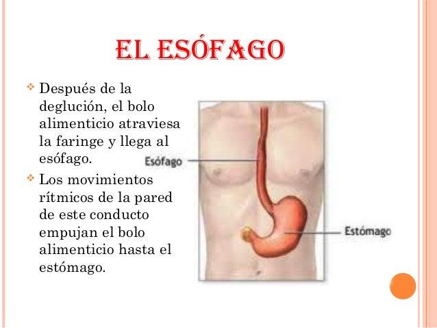 El masaje de la espalda a la osteocondrosis de pecho