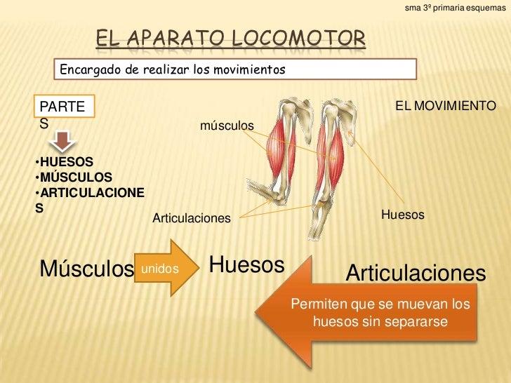 sma 3º primaria esquemas        EL APARATO LOCOMOTOR   Encargado de realizar los movimientosPARTE                         ...