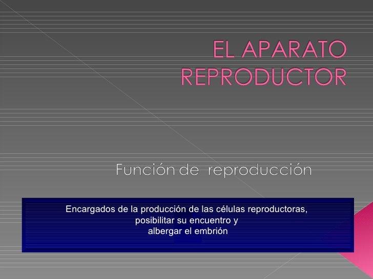 Encargados de la producción de las células reproductoras,  posibilitar su encuentro y  albergar el embrión