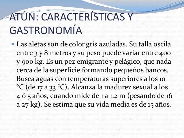 ATÚN: CARACTERÍSTICAS YGASTRONOMÍA Las aletas son de color gris azuladas. Su talla oscilaentre 3 y 8 metros y su peso pue...