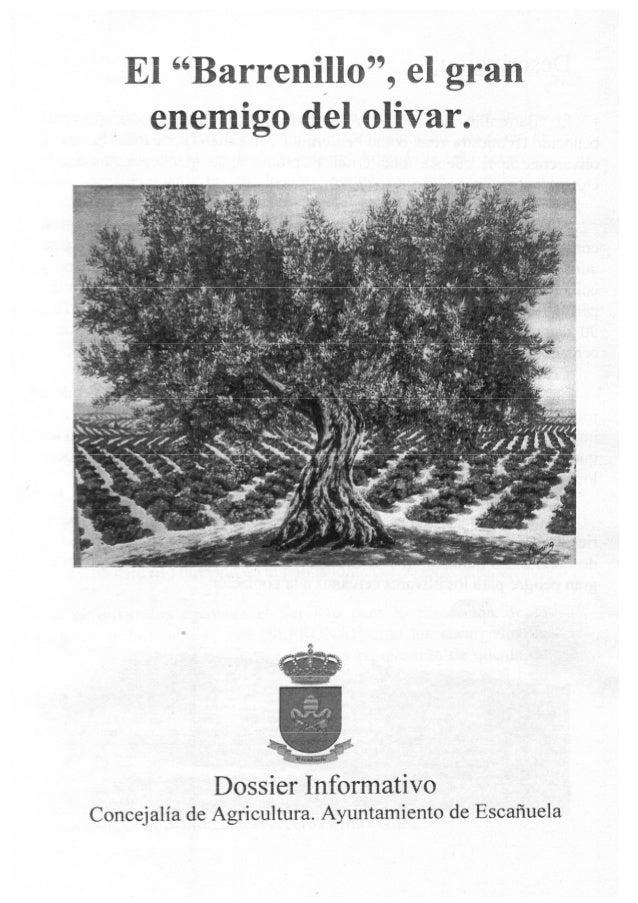 El barrenillo, el gran enemigo del olivar, dossier informativo Escañuela 2013