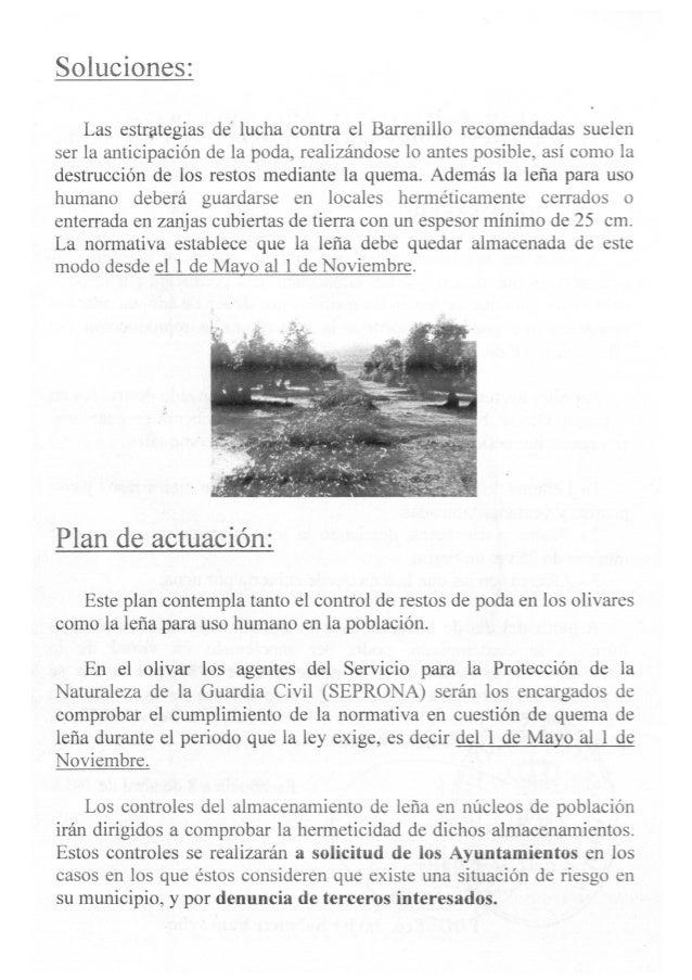El barrenillo, el gran enemigo del olivar, dossier informativo Escañuela 2013 Slide 3