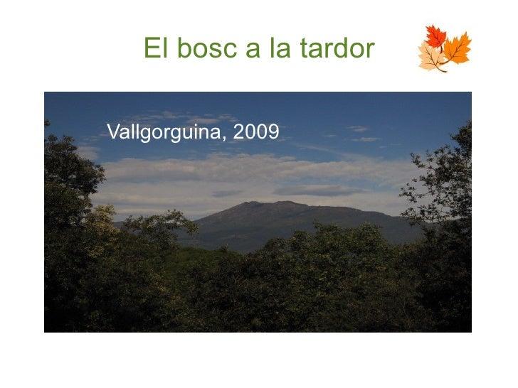El bosc a la tardor <ul><li>Vallgorguina, 2009 </li></ul>