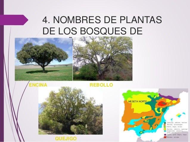 El bosque for Nombres d plantas ornamentales