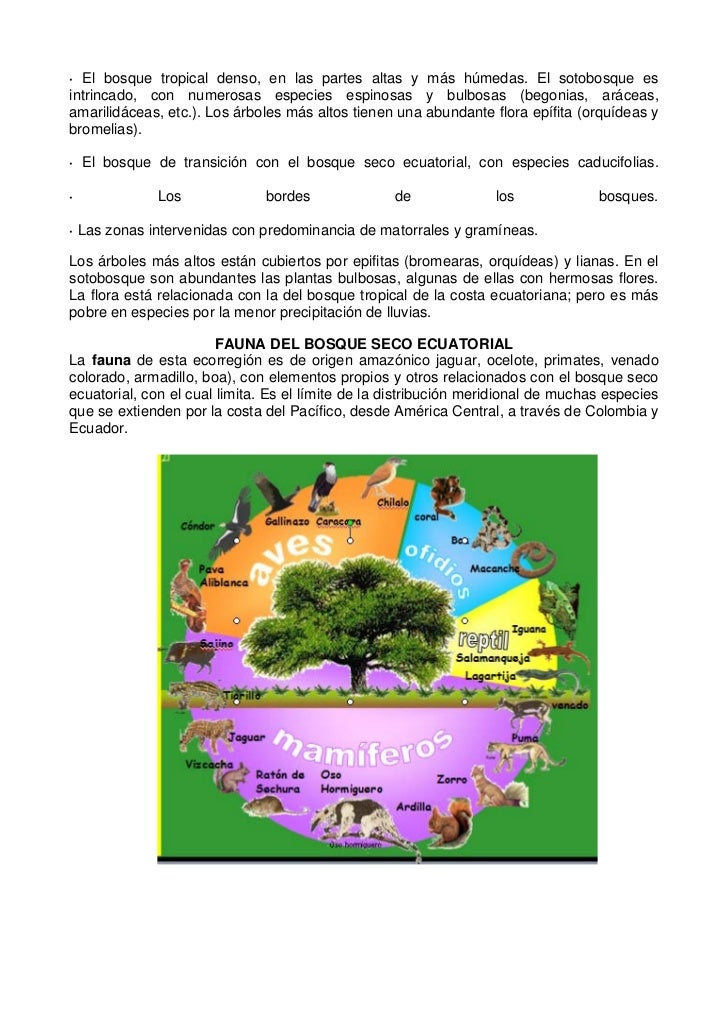 El bosque seco ecuatorial infanteoliverahuamanidomingosagastegui
