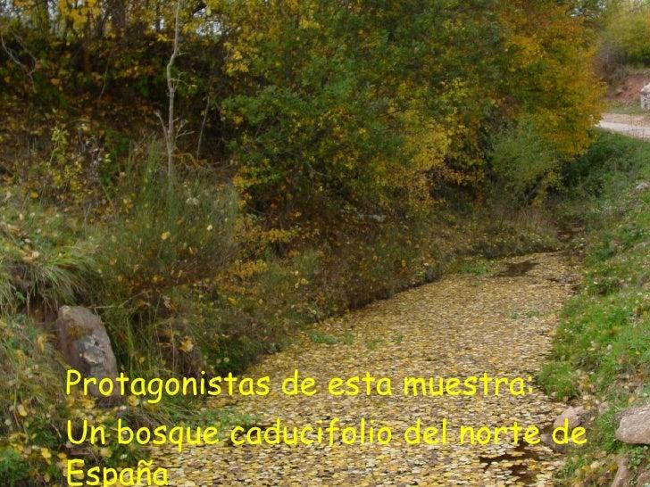 <ul><li>Protagonistas de esta muestra: </li></ul><ul><li>Un bosque caducifolio del norte de España </li></ul>