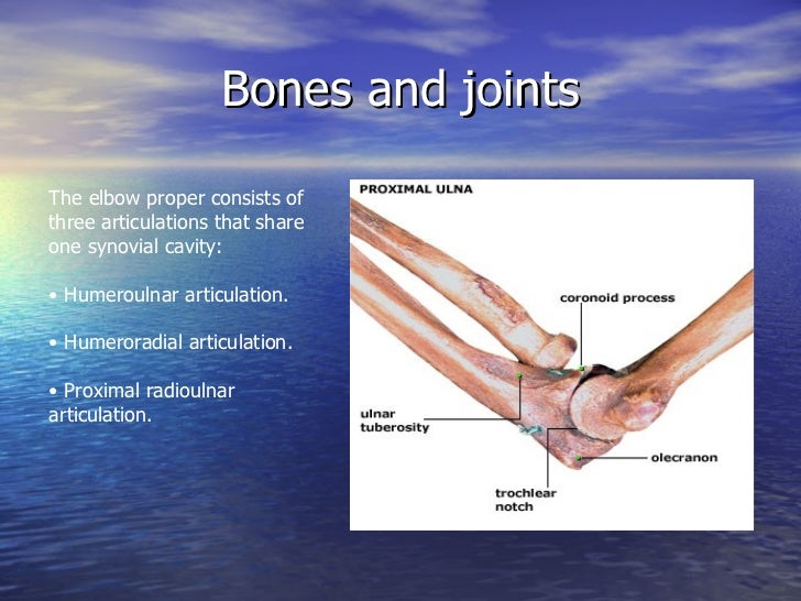 Elbow Anatomy And Examination
