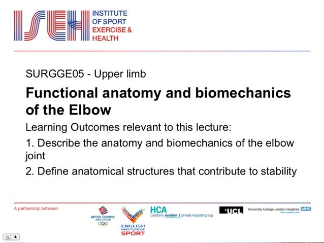 Elbow Anatomy And Biomechanics