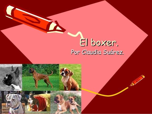 El boxer.  Por Claudia Suárez.