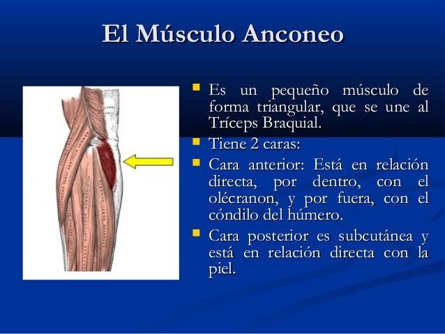 El músculo hinchar el antebrazo - ¿Tienes el lado de un músculo más ...