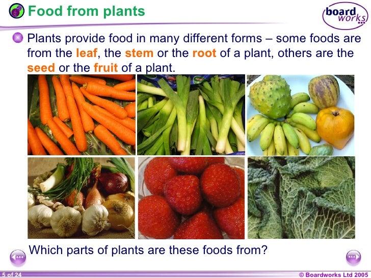 Summary On How Plants Make Food