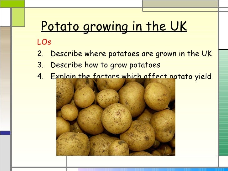Potato growing in the UK <ul><li>LOs </li></ul><ul><li>Describe where potatoes are grown in the UK </li></ul><ul><li>Descr...