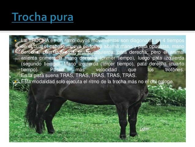  La TROCHA es un ritmo cuyos movimientos son diagonales en 4 tiemposen el cual el caballo mueve en forma alterna mano y p...