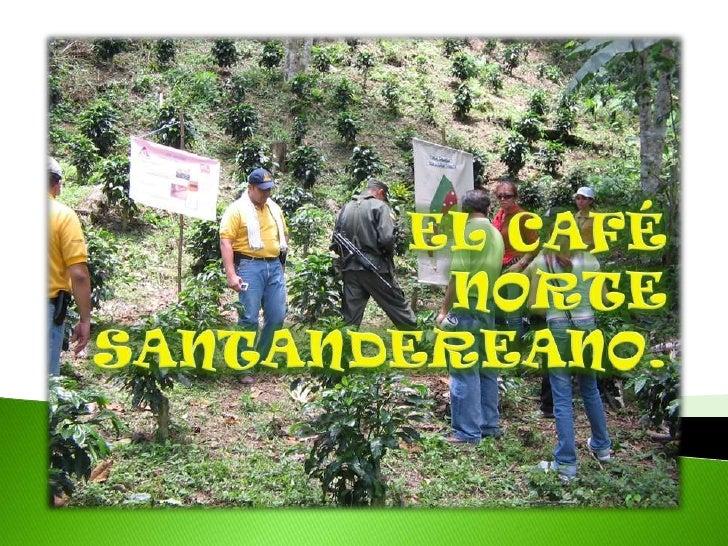 Salazar, Feb 2008, Comité                            de Cafeteros.Café Norte santandereano,Feb 2008, Comité deCafeteros.