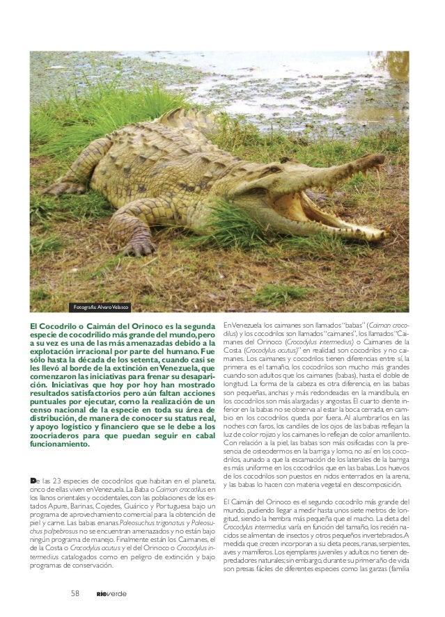 Caimán del Orinoco. ¿Un éxito en conservación?. Álvaro Velasco Slide 2