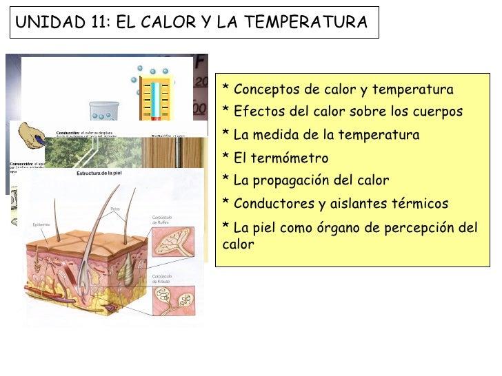 UNIDAD 11: EL CALOR Y LA TEMPERATURA                     * Conceptos de calor y temperatura                     * Efectos ...