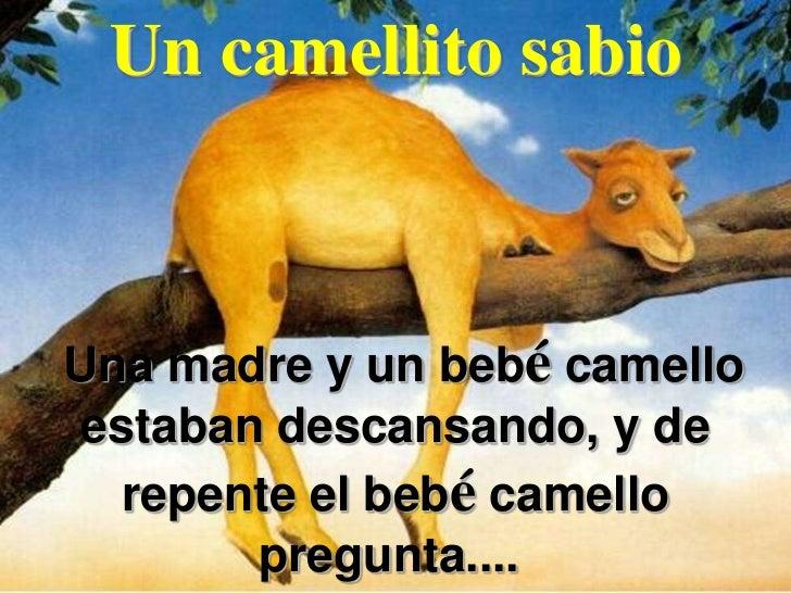 Un camellito sabioUna madre y un bebé camello estaban descansando, y de   repente el bebé camello        pregunta....