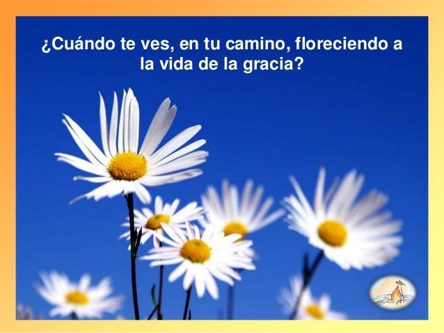 ¿Cuándo te ves, en tu camino, floreciendo a la vida de la gracia?