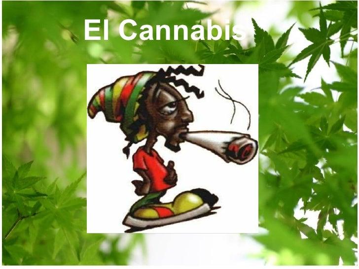 El Cannabis