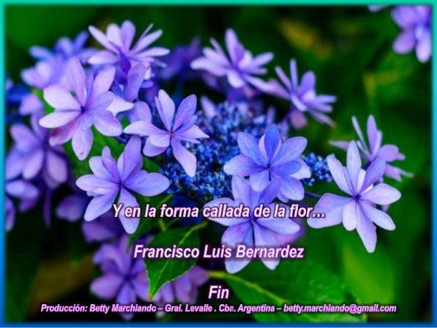 El canto  poema de francisco luis bernardez