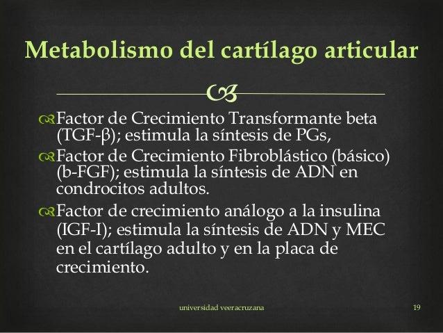 Factor de Crecimiento Transformante beta (TGF-β); estimula la síntesis de PGs, Factor de Crecimiento Fibroblástico (bá...