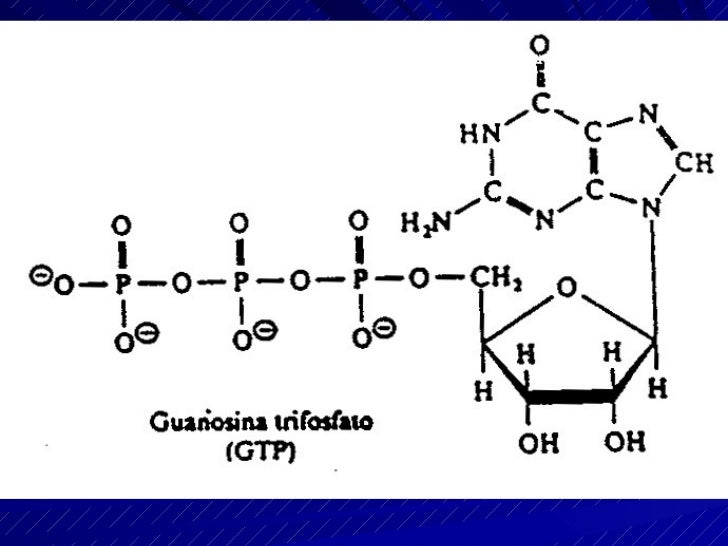 Los coenzimas de        oxidación-reducción  Los átomos de hidrógeno desprendidos en las reacciones de oxidación son capta...