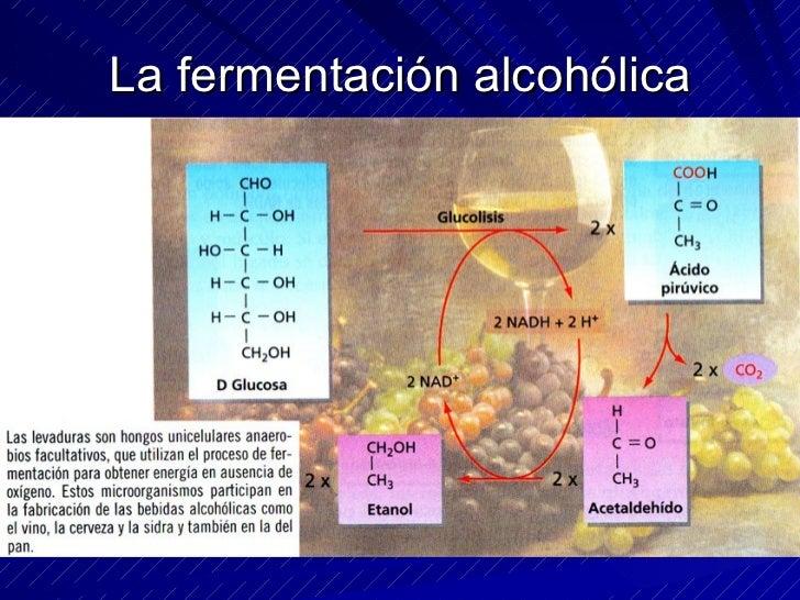 CICLO DE KREBS Se realiza en la matriz mitocondrial.  Es un conjunto de reacciones en las cuáles los dos átomos de C del A...