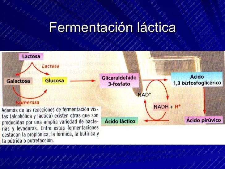 La cadena respiratoria Su finalidad es la oxidación de las coenzimas reducidas NADH + H+ y FADH2  Consiste en una cadena d...