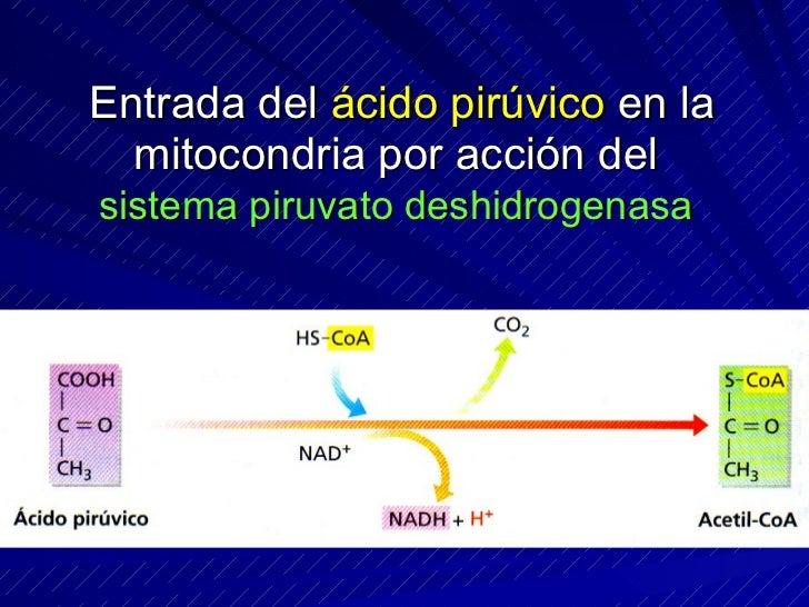 Transporte de electrones en la cadena respiratoria
