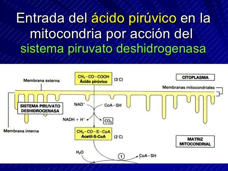 La fosforilación oxidativa