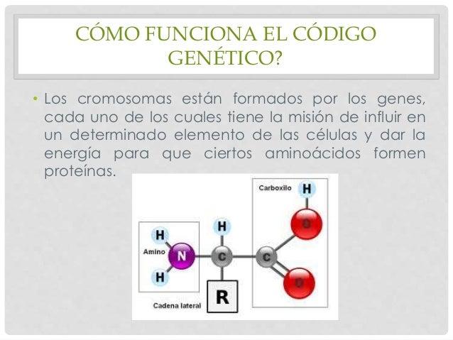 El c digo gen tico - Como funcionan los emisores termicos ...