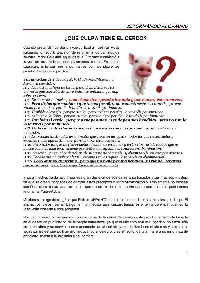 Único Anatomía De Los Fetal Parte Cerdo 1 Respuestas Composición ...