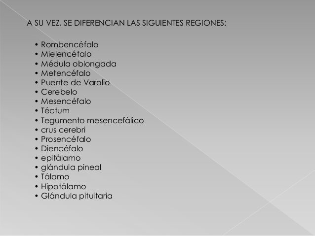 A SU VEZ, SE DIFERENCIAN LAS SIGUIENTES REGIONES: • Rombencéfalo • Mielencéfalo • Médula oblongada • Metencéfalo • Puente ...