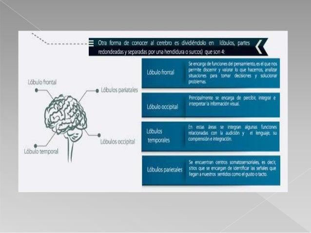 El esquema de funcionamiento del cerebro sería el siguiente: la neurona A demanda paquete de energía, la neurona B recibe ...