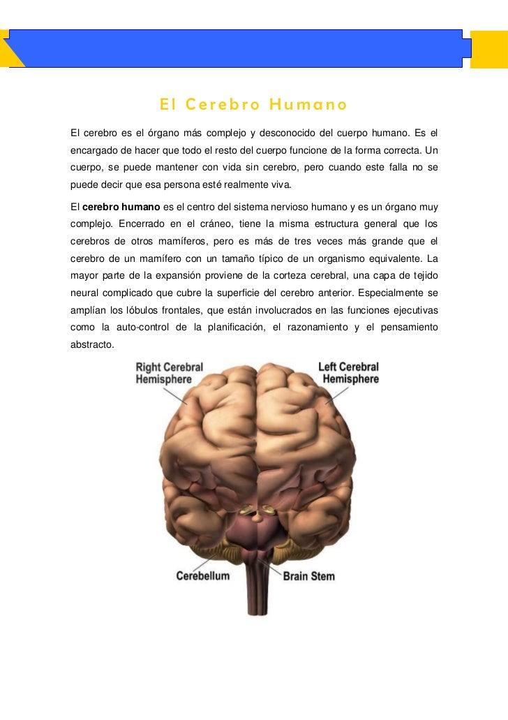El Cerebro HumanoEl cerebro es el órgano más complejo y desconocido del cuerpo humano. Es elencargado de hacer que todo el...