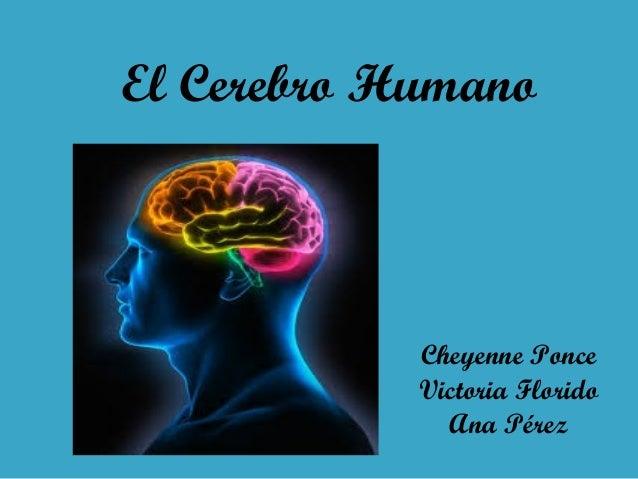 El Cerebro Humano  Cheyenne Ponce Victoria Florido Ana Pérez