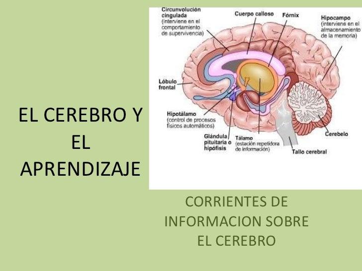 El cerebro y el aprendizaje for Todo sobre el marmol