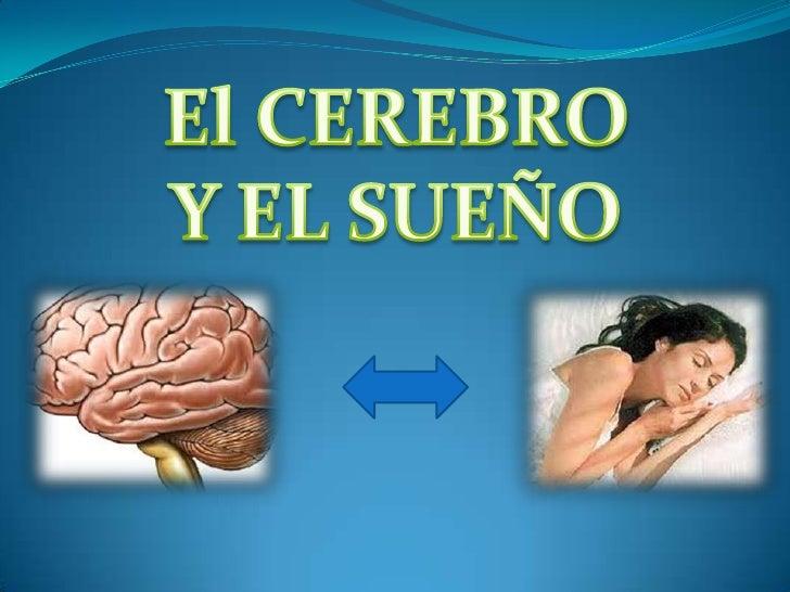 El cerebro y el sueño Slide 2