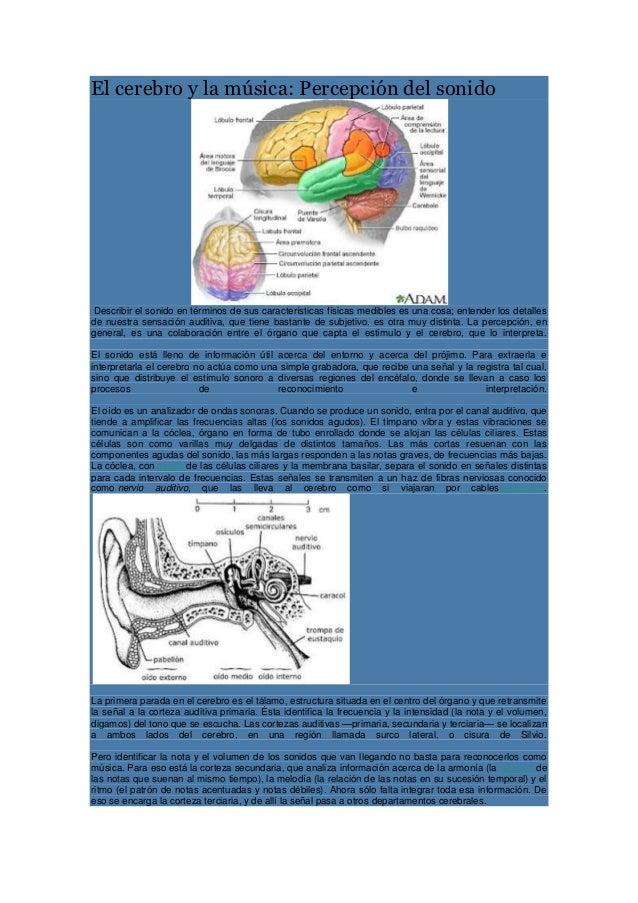 El cerebro y la música: Percepción del sonido Describir el sonido en términos de sus características físicas medibles es u...