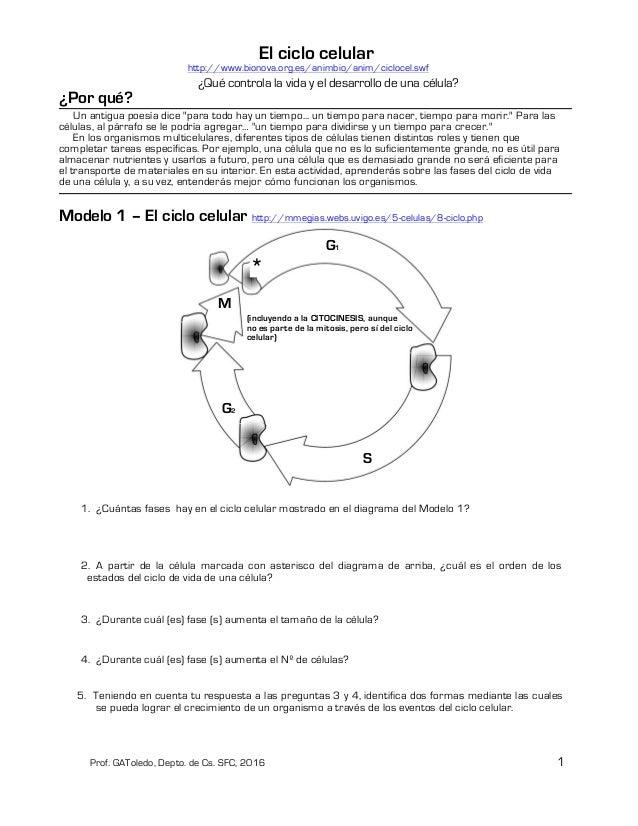 El ciclo celular. Guía para segundo medio o para profundizar el tema …