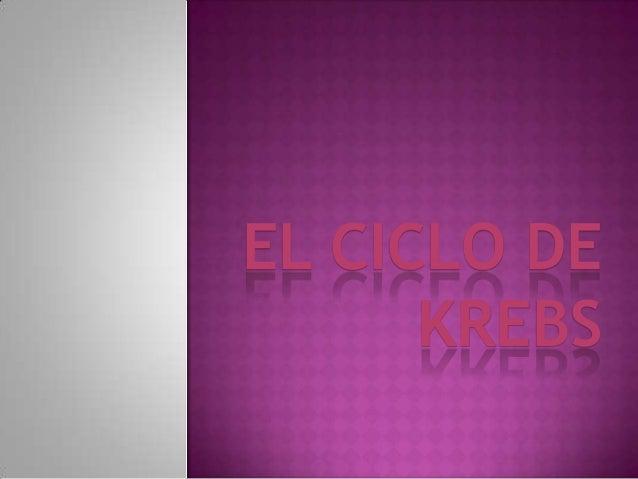 EL CICLO DE KREBS