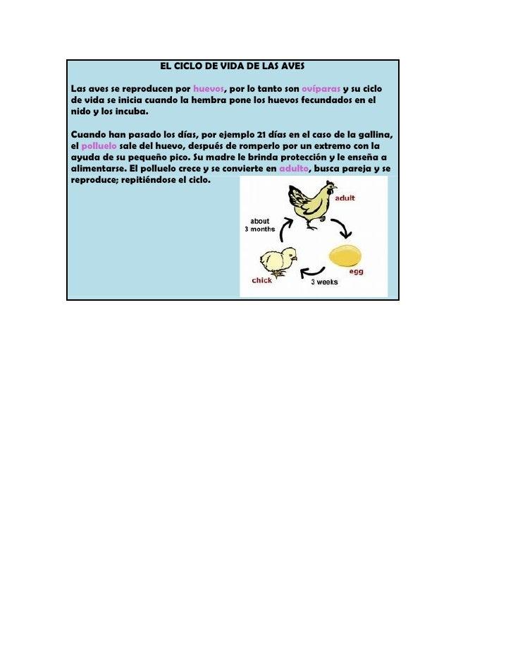 EL CICLO DE VIDA DE LAS AVESLas aves se reproducen por huevos, por lo tanto son ovíparas y su ciclode vida se inicia cuand...
