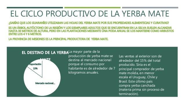 Circuito Productivo De La Yerba Mate : El ciclo productivo de la yerba mate en argentina
