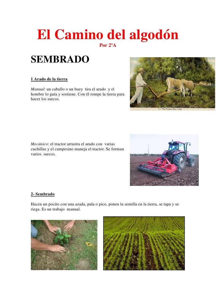 El Camino del algodón                                        Por 2ºASEMBRADO1 Arado de la tierraManual: un caballo o un bu...