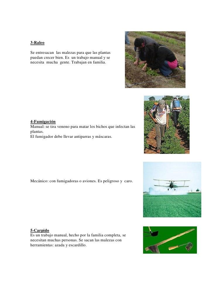 Circuito Productivo Del Algodon : El circuito del algodón