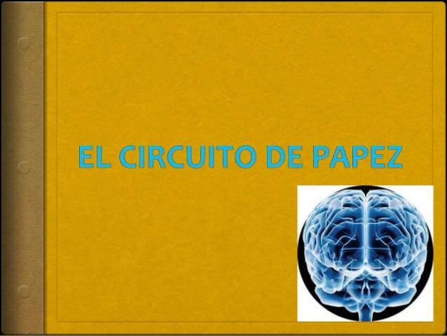 Circuito De Papez : El circuito de papez