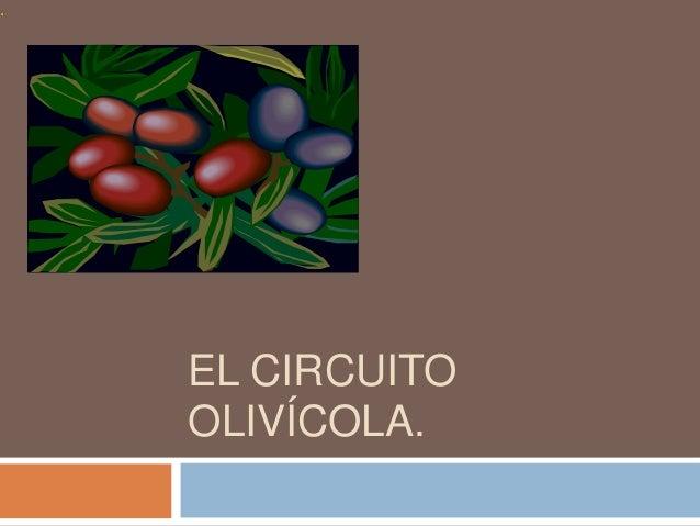 EL CIRCUITO OLIVÍCOLA.