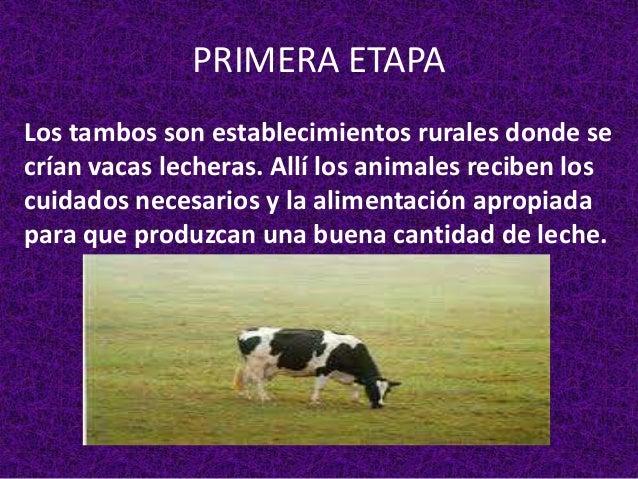Circuito Productivo De La Leche : El circuito productivo de la leche