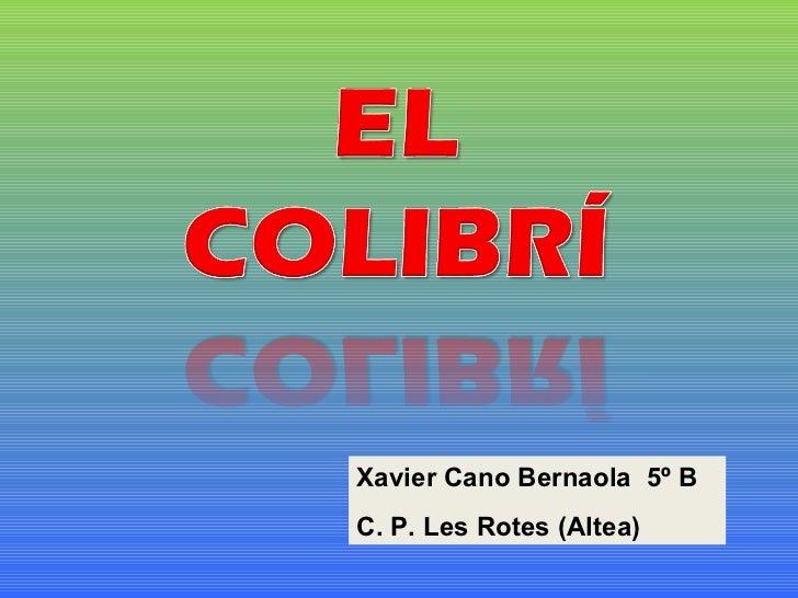 Xavier Cano Bernaola  5º B C. P. Les Rotes (Altea)
